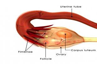 卵巢早衰严重吗?怎么才能预防?